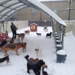 Preferred Pet Care Photos 005
