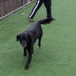 Preferred Pet Care Photos 3.7.14 001